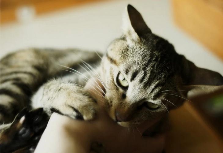 Как кошка показывает свою любовь к хозяину