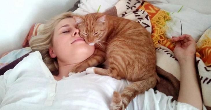 Как кошки показывают свою любовь к хозяину