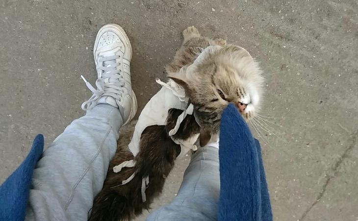 Как кошки выражают свою любовь к хозяевам