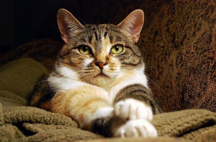 Как кот выражает свою любовь к хозяйке