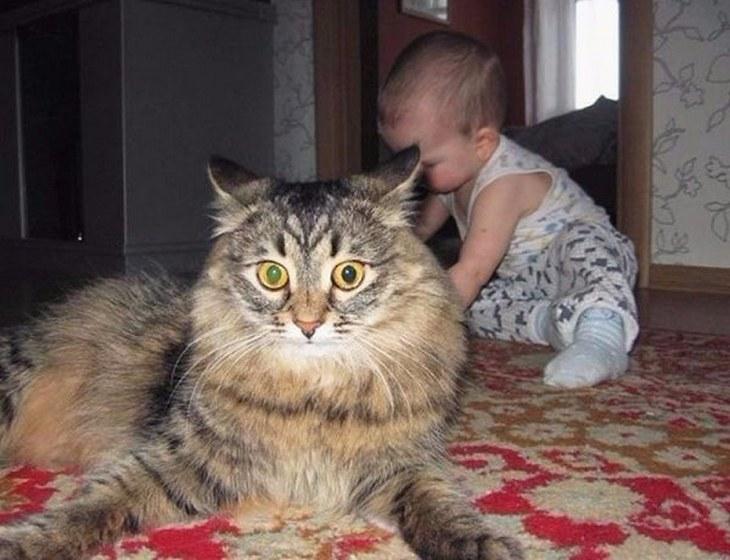 Как коты проявляют любовь к хозяину