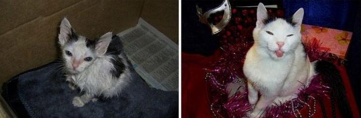 Признаки любви кота к хозяину