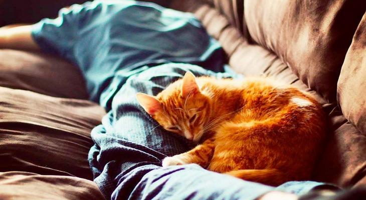 Кошка спит в ногах человека